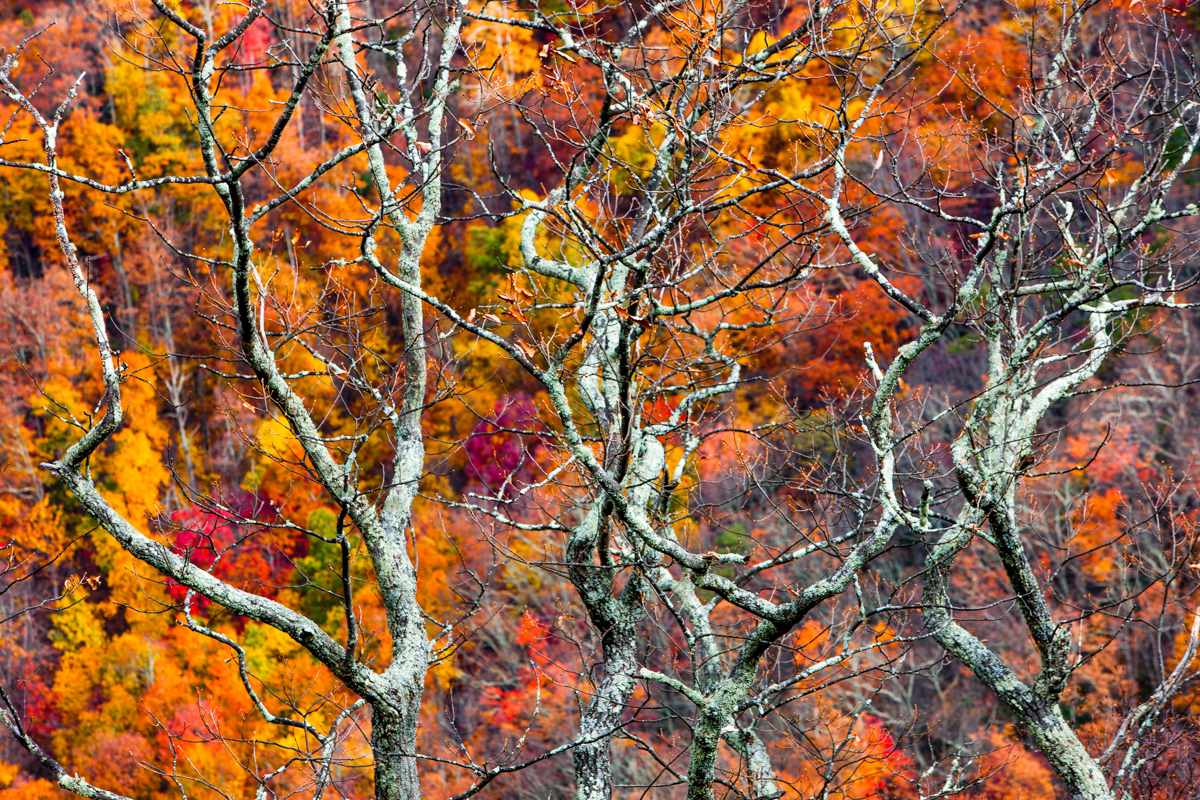 F0457 - 063 - RedOctober Carolina BeechMountain - 20141029